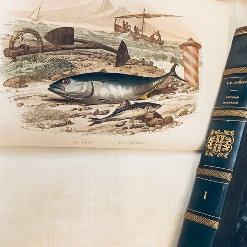 LACEPEDE. Histoire Naturelle, comprenant les cétacés, les quadrupèdes...Paris, …