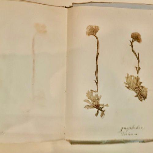 SAVOIE CLARET [HERBIER] Souvenir de la Flégère. CHAMONIX Plantes qui s'y trouven…
