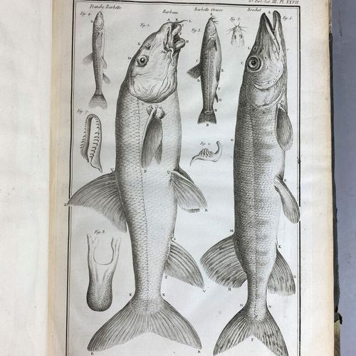DUHAMEL DU MONCEAU (Henri Louis),  A general treatise on fish and a history of t…