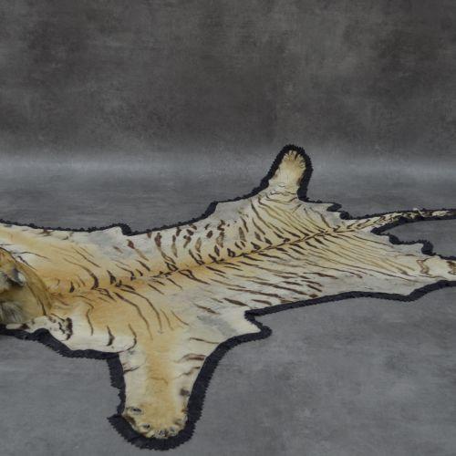 Peau de tigre véritable Certificat CITES Véritable peau de tigre . Tête naturali…