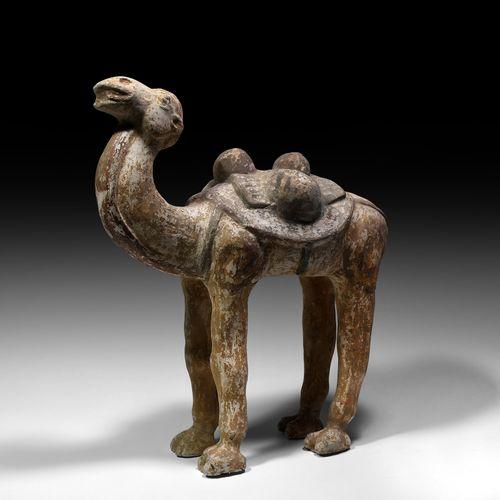 Chameau chinois Tang en terre cuite. Dynastie Tang, 618 907 AD ou plus tard. Cha…