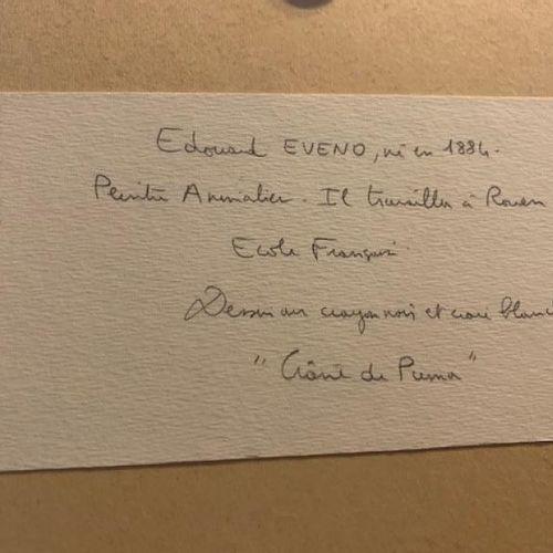 EVENO Edouard (1884)  Crânes de puma  Crayon noir et craie blanche