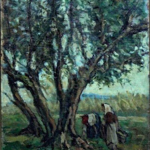 Giuseppe COMPARINI 朱塞佩 康帕里尼(Giuseppe COMPARINI) 橄榄树的收获 布面油画 作品右下方有签名 50x35cm    …