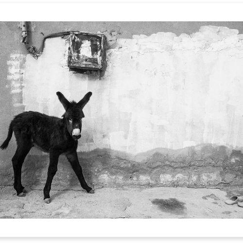 Zied Ben Romdhane Zied Ben Romdhane   驴子     海报   用150克/平方米的高质量纸张印刷。   100份无签名版 …