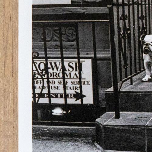 ELLIOTT ERWITT Elliott Erwitt  New York City, 2000  Épreuve C Type sur papier Fu…