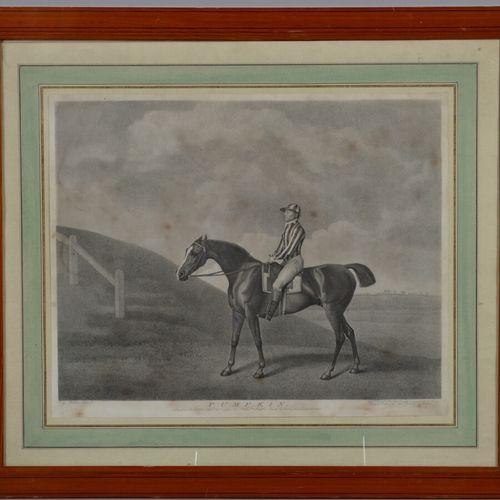 D'après STUBBS  Pumpkin  Gravure en noir.  42 x 51 cm  Rousseurs