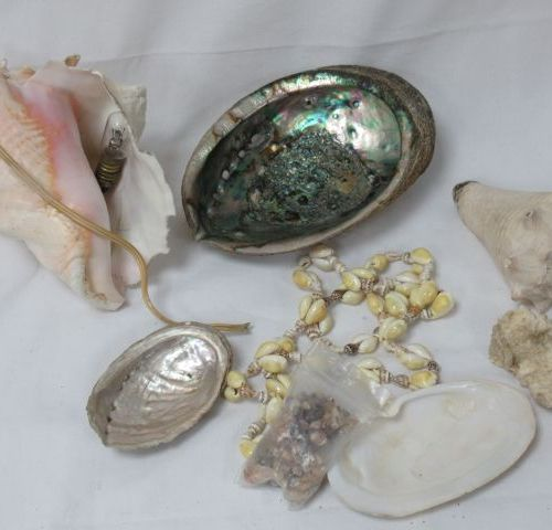 Set of shells, one of which is mounted as a lamp and a necklace (acc). 6 16 cm