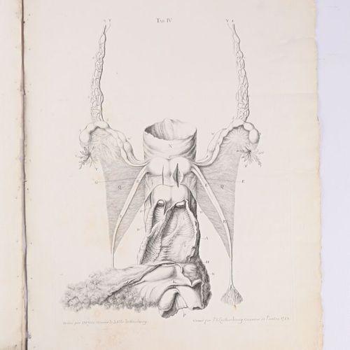 GEORG HEINRICH  Tabulae Anatomicae Quator Uteri Duplicis Observationem Rariorem …