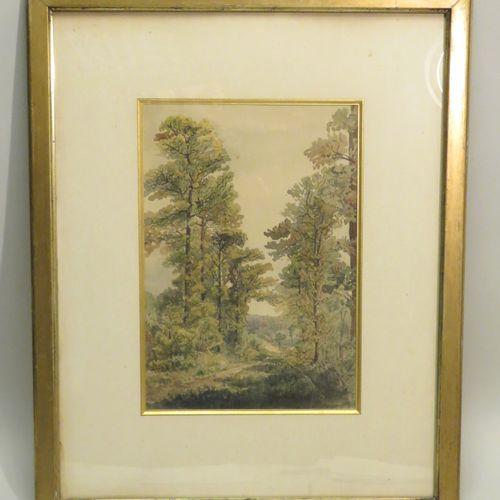 Ecole française du XIXème siècle. Chemin en sous bois, 1894. Encre brune et aqua…