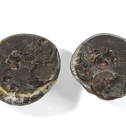 Nodule en forme de géode coupée en deux  Europe occidentale (probablement Anglet…
