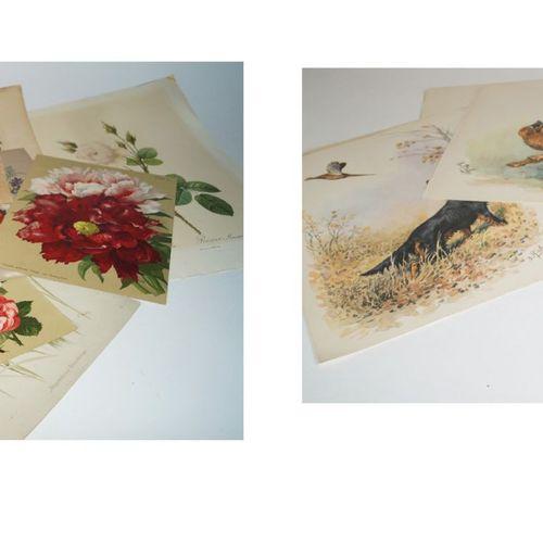 Antiquités, Varia, gravures assorties, a) gravures botaniques : Gravures sur aci…