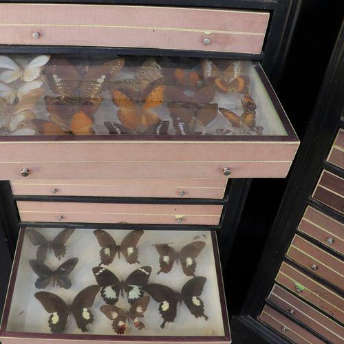 Deux meubles en papillons en bois noirci contenant respectivement 10 et 20 boite…