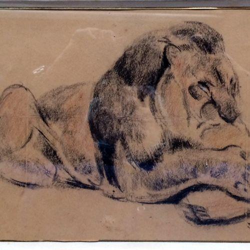 """Jean GRAVES (né en 1897) """"Lion somnolant"""" Fusain sur papier beige, signé en bas …"""