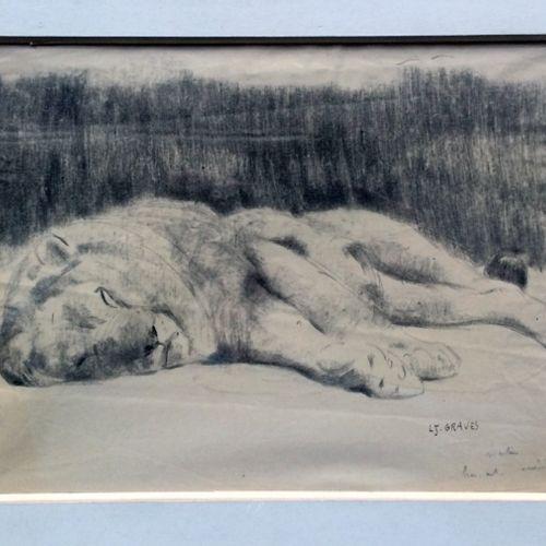 """Jean GRAVES (né en 1897) """"Grand lion dormant"""" Crayon et fusain sur papier, signé…"""