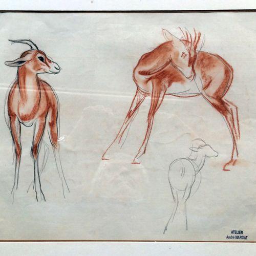 """André MARGAT (1903 1999) """"Etude de gazelles"""" Dessin au crayon et sanguine sur pa…"""