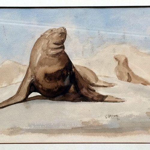 """Jean GRAVES (né en 1897) """"Otaries"""" Belle aquarelle sur papier, signée en bas à d…"""