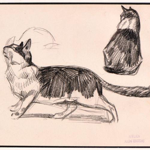 André MARGAT (1903 1999) Etude de « Chats » Dessin au crayon et fusain sur papie…