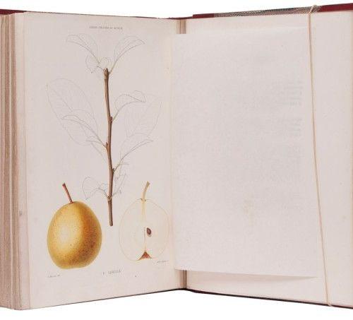 Decaisne, J. Le jardin fruitier du muséum ou iconographie de toutes les espèces …