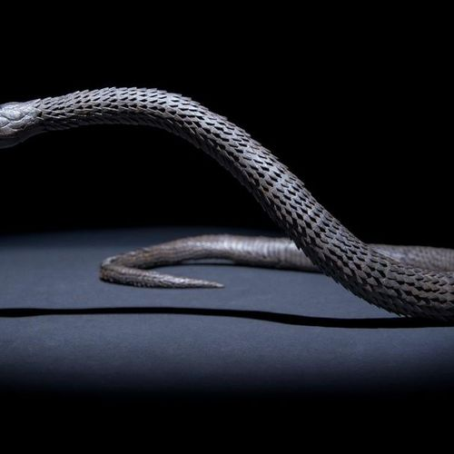 A LARGE JAPANESE MYOCHIN ARTICULATED IRON MODEL OF A SNAKE, JIZAI OKIMONO EDO OR…