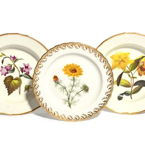 Three Derby botanical plates c.1795 1800, two soup plates and decorated in patte…