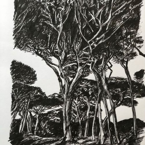 "BONNAND Véronique ""The Pines"" Ink drawing 30 x 40 cm signed.    Free shipping fo…"