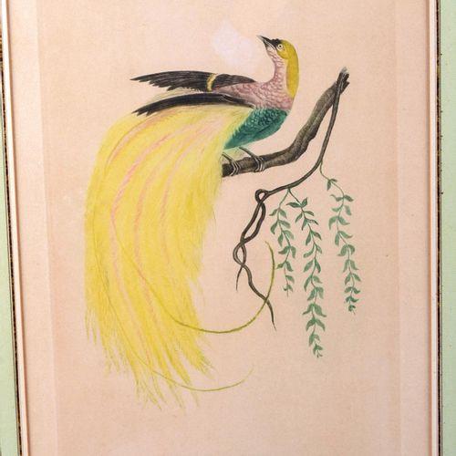 """The Shining Paradise""  Polychrome print;  Size : 36 cm x 23,5 cm"