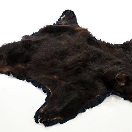 Ours noir (baribal) Ours noir (baribal)    Peau montée en tapis avec tête recons…
