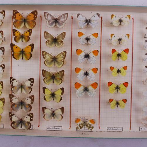 QUATRE BOITES  En majorité Pieridae français et exotiques.    Ref 51 52 119 122