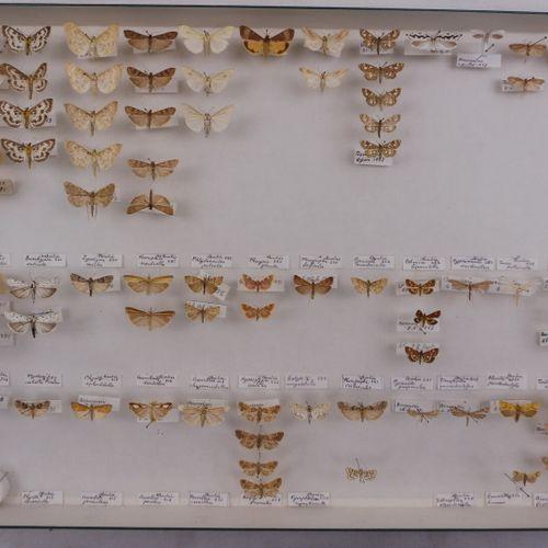 CINQ BOITES DE DIVERS NOCTURNES FRANÇAIS  Geometridae, Noctuidae.    Ref 103 104…