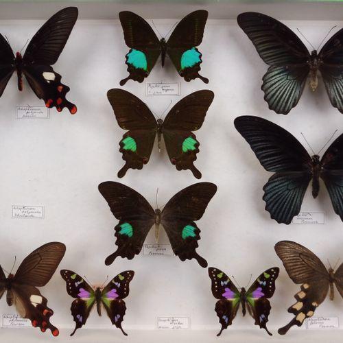 TROIS BOITES DE DIVERS EXOTIQUES  Papilionidae, Nymphalidae, Danaidae, Brassolid…