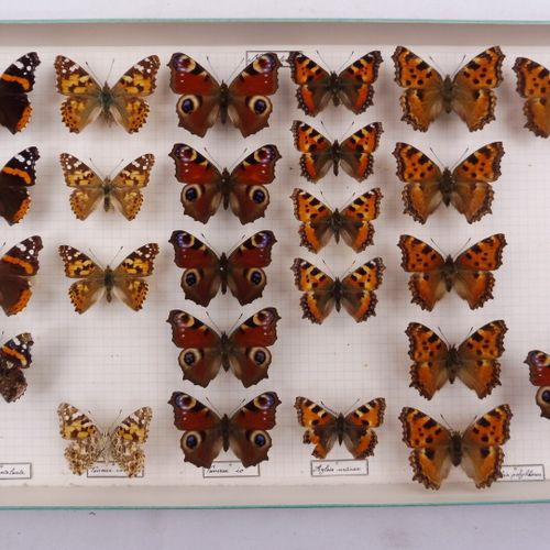 SEPT BOITES DE PAPILLONS DIVERS  Nymphalidae, Pieridae    Ref 117 118 123 124 12…