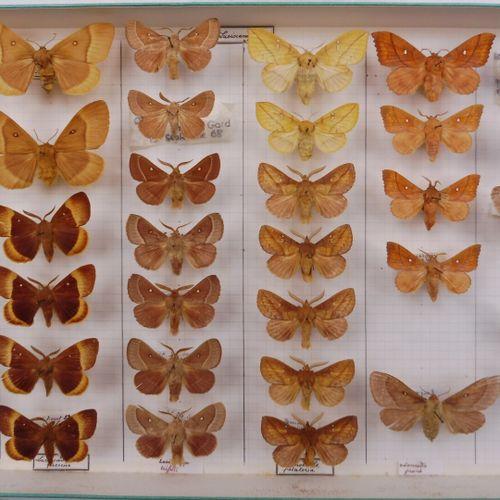 QUATRE BOITES DE NOCTURNES FRANÇAIS  Lasiocampidae, Cossidae, Noctuidae    Ref 1…