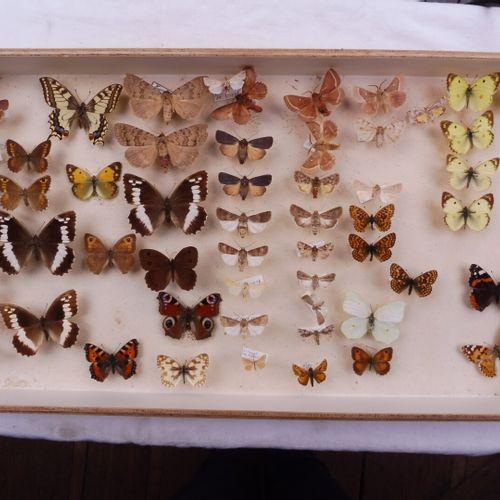 INSECTES DIVERS ET LIVRES  Nymphalidae exotiques, divers dans une boîte de trans…
