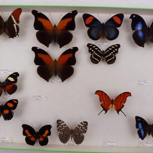 DEUX BOITES DE PAPILLONS EXOTIQUES DIVERS  Papilionidae, Nymphalidae, Charaxes  …