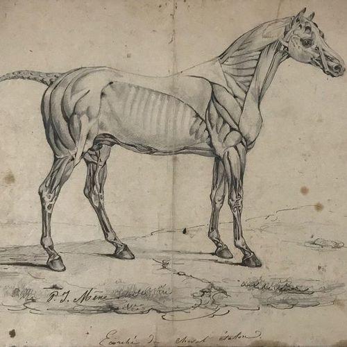 Pierre Jules Mene (1810 1879) Etude de cheval Plume et encre brune sur trait de …