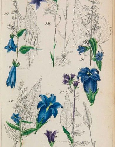 Lorek, Christian Gottlieb Flora Prussica. Avec 241 couleur partielle. Lithog. Pl…