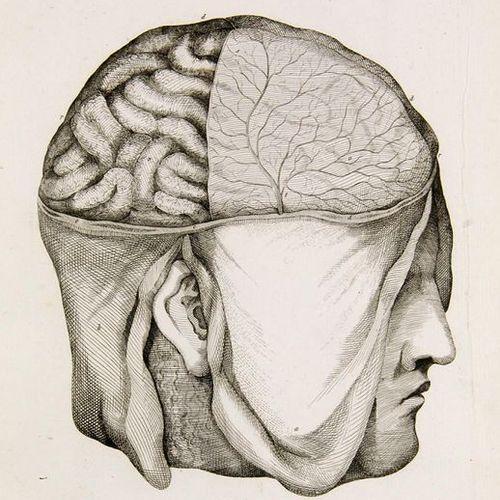 Medicine    Vicq d'Azyr, Félix    Oeuvres de Vicq d'Azyr, recueillies et publiée…