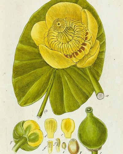 Botany    Storm, Jacob    Germany's flora in illustrations after nature with des…