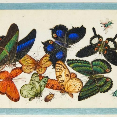 Zoology Butterflies China        Export album with Chinese drawings on mark pape…