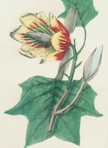 Good,P.P. The family flora and materia medica botanica containing the botanical …