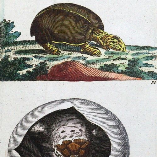 (Wilhelm,G.T.). Conversations d'histoire naturelle. Les amphibiens. Augsburg, En…
