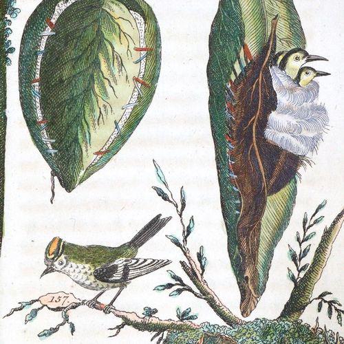 (Wilhelm,G.T.). Les divertissements de l'histoire naturelle. La deuxième partie …