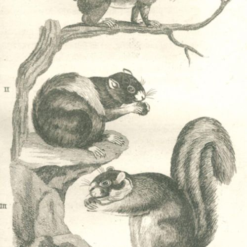 (Pennant,T.). 四足动物的历史。(2nd ed.).2卷。伦敦,怀特1781年,4°。附有2幅铜版画,并附有徽章。A. 52张铜板。XXIV,284…