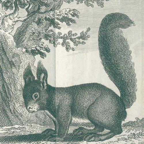 Buffon,(G.L.L.)de. Histoire naturelle des animaux quadrupèdes. 10 volumes de la …