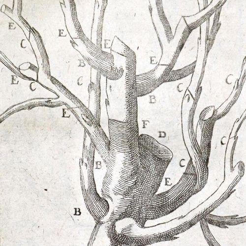 Dahuron,R. 完整的花园建设,其中提供了关于本地和外国植物、花卉和树木的全面信息....。第7版。Weimar, Hoffmann 1757. With…