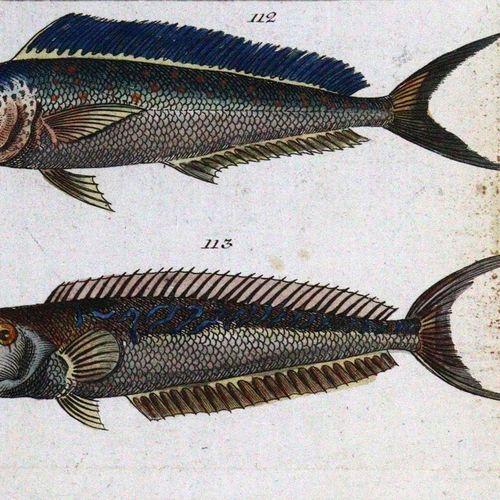 Wilhelm,G.T. Les divertissements de l'histoire naturelle. Les oiseaux, première …