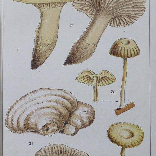 Grevillea. 每月(后来:每季度)记录隐蔽植物学及其文献....。1 22卷(=全部)共7卷。伦敦,威廉姆斯和诺盖特1872 94年。有1幅肖像画,18…