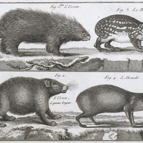 (Desmarest,A.G. Mammalogie, ou description des especes des mammiferes...)。)文本 a.…