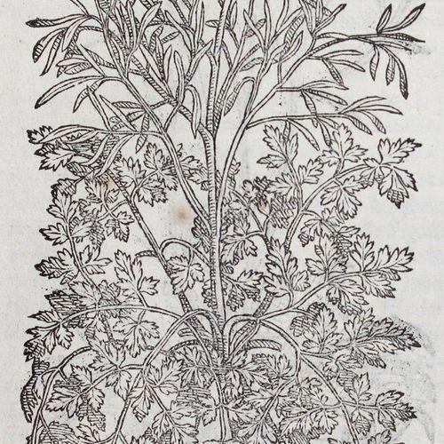 Matthiolus,P.A. I discorsi ne i sei libri della materia medicinale.威尼斯,V.Valgris…