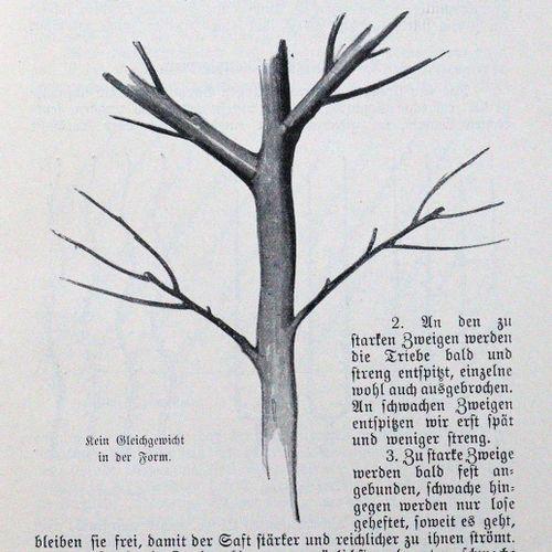 Böttner,J. Treillis et fruits nobles. Plantation, taille et soins. 2ème édition,…